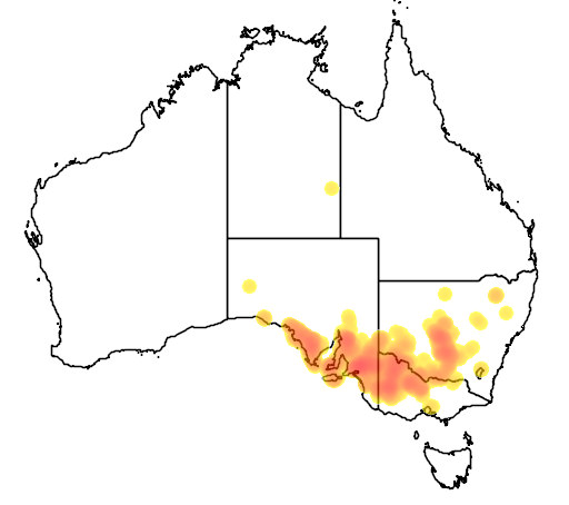 Acacia brachybotrya flora location map