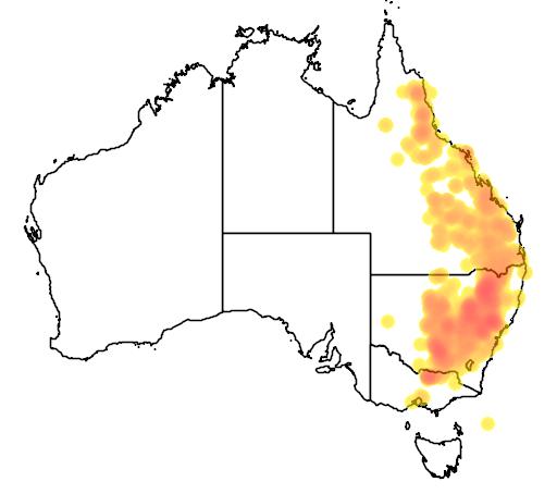 Acacia decora flora location map