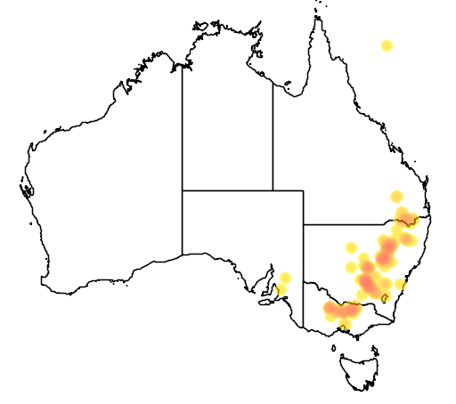 Acacia flexifolia flora location map