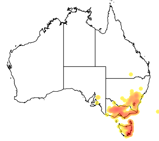 Acacia genistifolia flora location map
