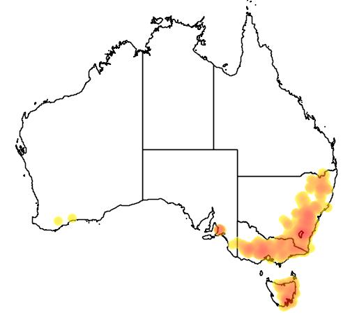 Acacia gunnii flora location map