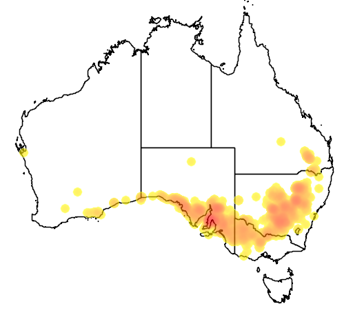Acacia hakeoides flora location map