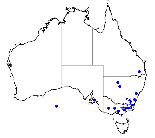 Acacia kettlewelliae flora location map