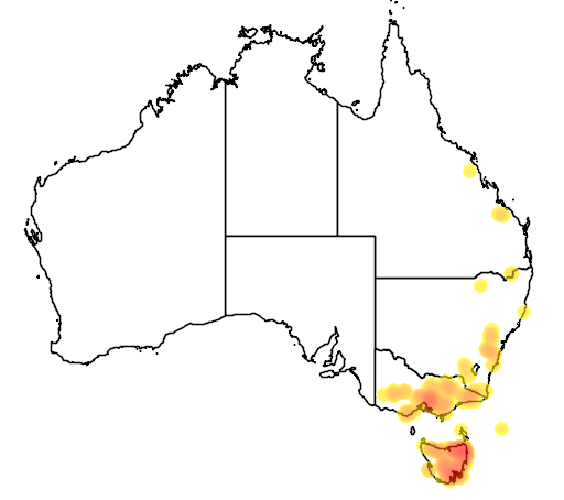 Acacia leprosa flora location map