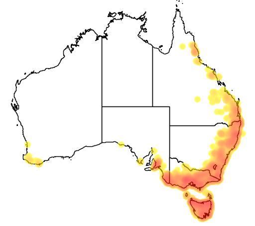Acacia melanoxylon flora location map