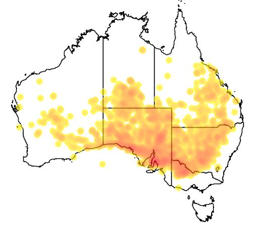 Acacia oswaldii flora location map