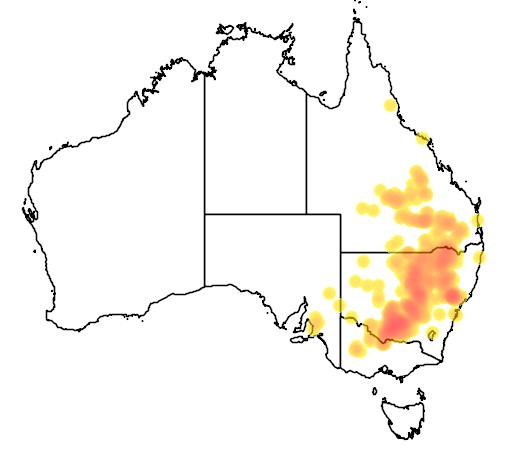 Acacia pendula flora location map