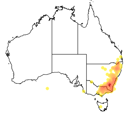 Acacia rubida flora location map