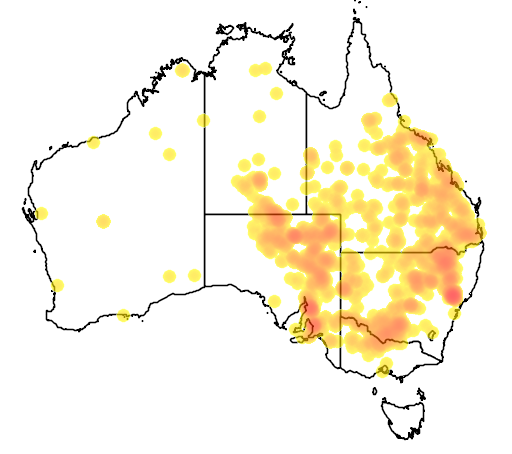 Acacia salicina flora location map