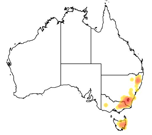 Acacia siculiformis flora location map