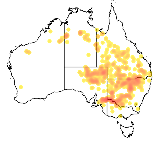 Acacia stenophylla flora location map