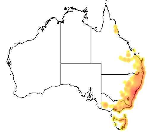 Acacia ulicifolia flora location map