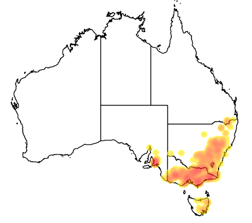 Acacia verniciflua flora location map