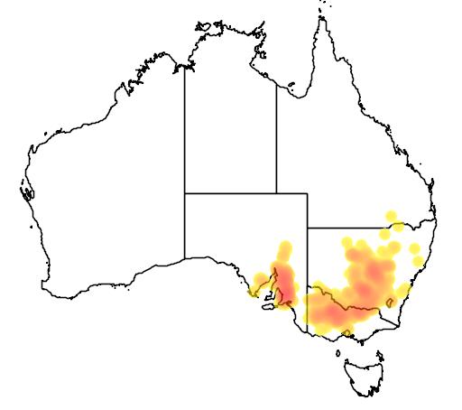 Aristida behriana flora location map
