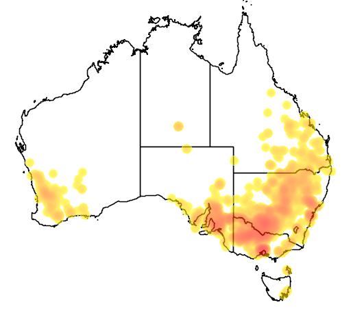 Atriplex semibaccata flora location map