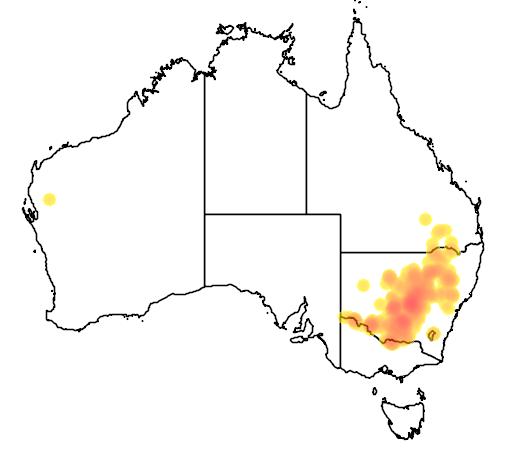 Atriplex spinibractea flora location map
