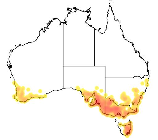 Austrostipa mollis flora location map