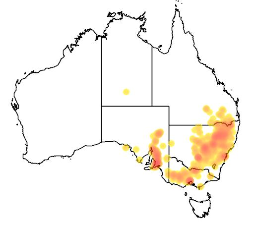 Austrostipa setacea flora location map