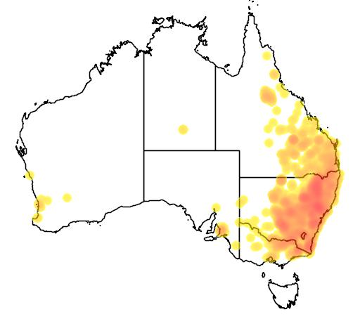 Brachychiton populneus flora location map