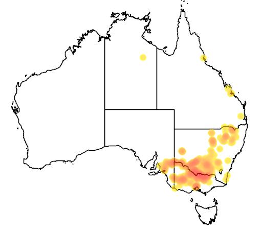 Brachyscome gracilis flora location map