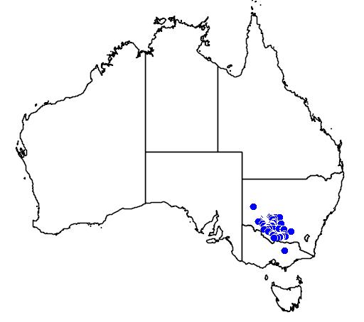 Brachyscome papillosa flora location map