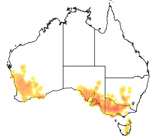 Brachyscome perpusilla flora location map
