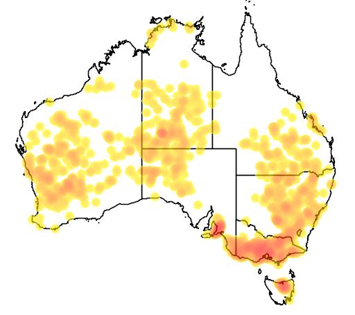 Brunonia australis flora location map