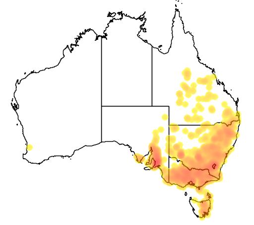 Bulbine bulbosa flora location map
