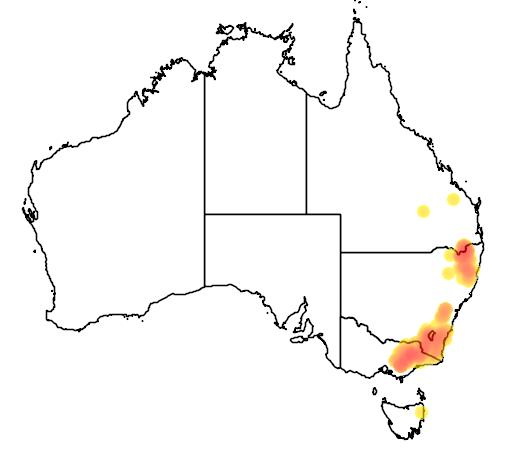 Callistemon pityoides flora location map