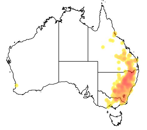 Callitris endlicheri flora location map