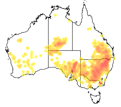 Callitris glaucophylla flora location map