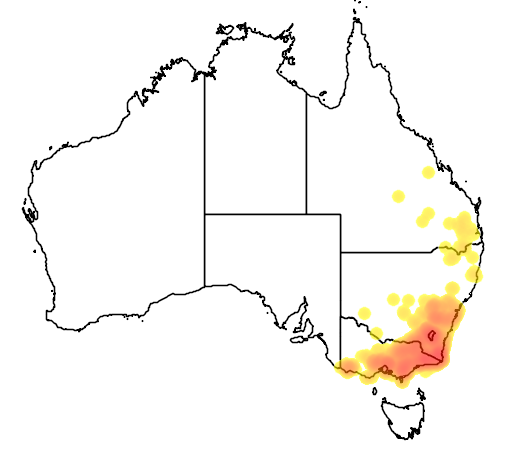 Cassinia longifolia flora location map