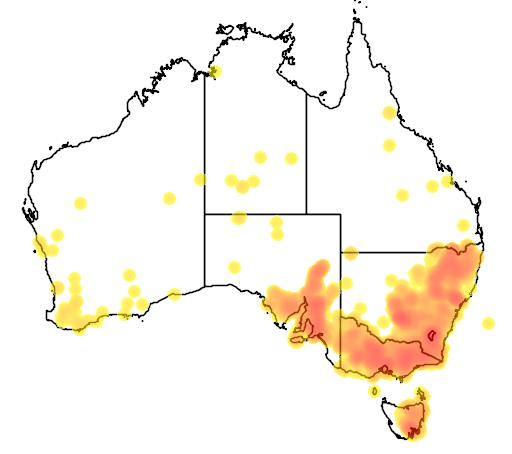 Chrysocephalum semipapposum flora location map