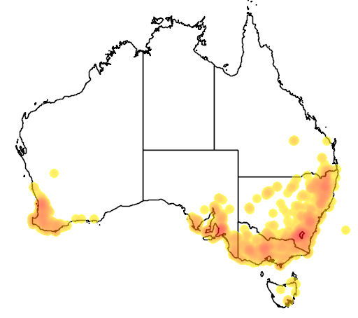 Craspedia variabilis flora location map