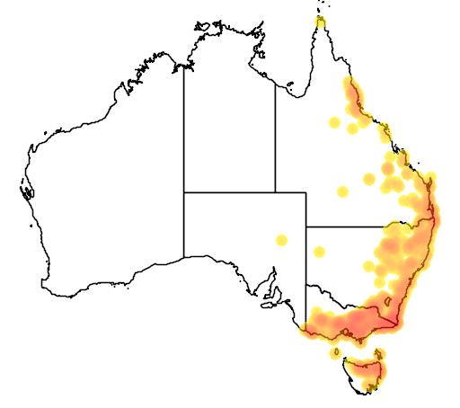 Cyperus lucidus flora location map