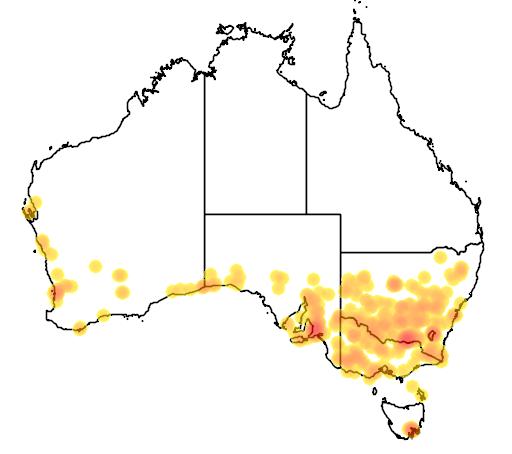 Danthonia caespitosa flora location map