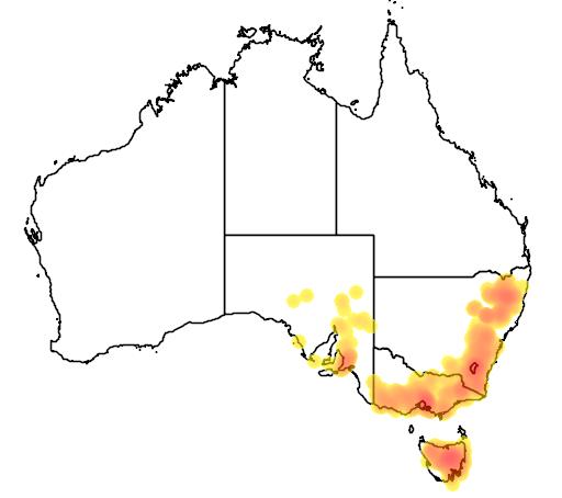 Danthonia laevis flora location map