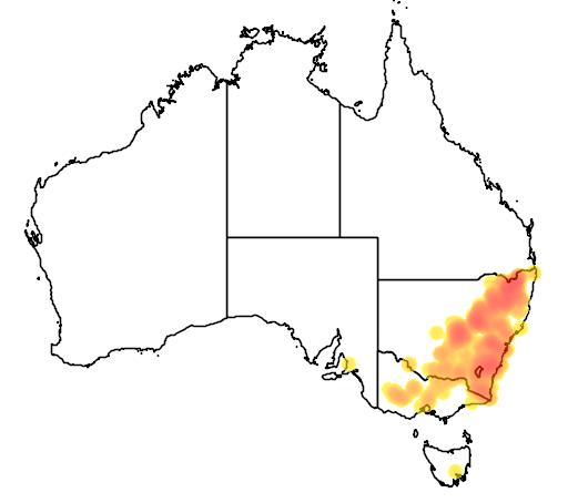 Danthonia monticola flora location map
