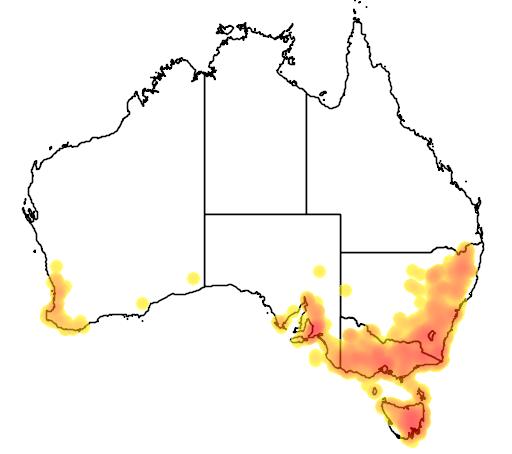Danthonia pilosa flora location map