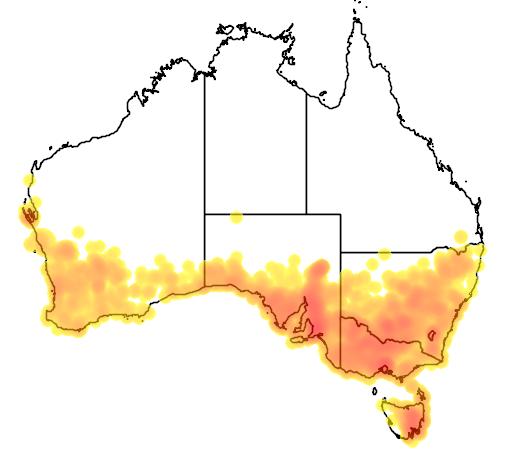 Danthonia semiannularis flora location map