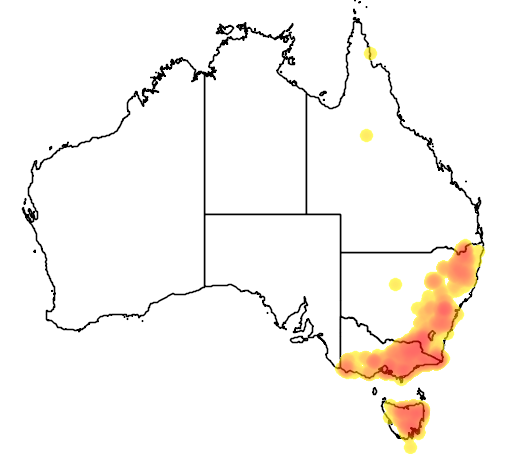 Daviesia latifolia flora location map