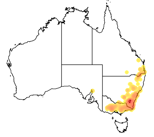 Daviesia mimosoides flora location map