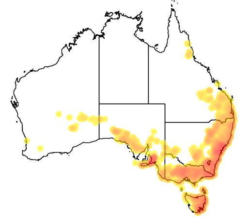 Daviesia ulicifolia flora location map