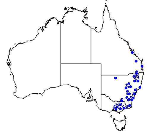 Dillwynia juniperina flora location map