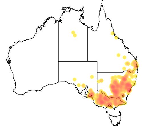 Dodonaea viscosa subsp cuneata flora location map