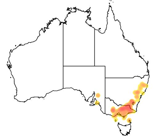 Eucalyptus bicostata flora location map