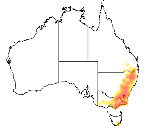 Eucalyptus bridgesiana flora location map