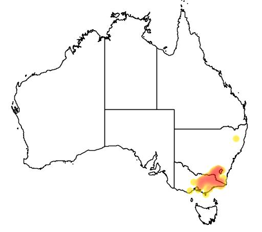 Eucalyptus camphora subsp humeana flora location map