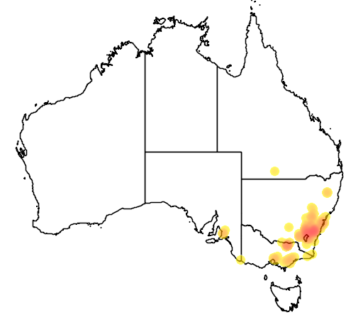 Eucalyptus cinerea flora location map