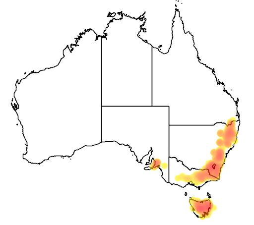 Eucalyptus dalrympleana flora location map